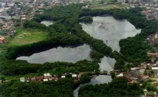 Área remanescente de manguesal sendo 'devorado' pelo avanço urbano (foto de Luciana Carneiro)